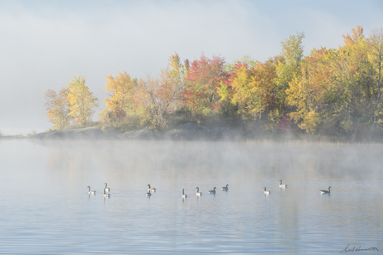 Geese on Vermillion River, Whitefish 18 x 27 photograph, aluminum matte