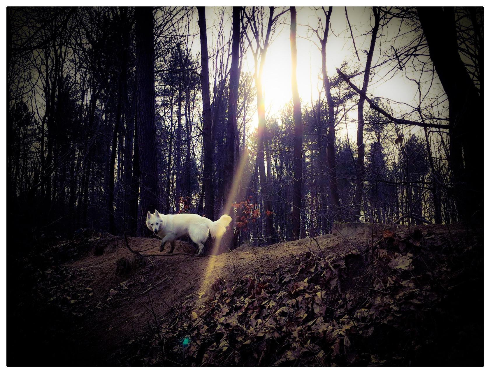 Kaly in het hondenbos