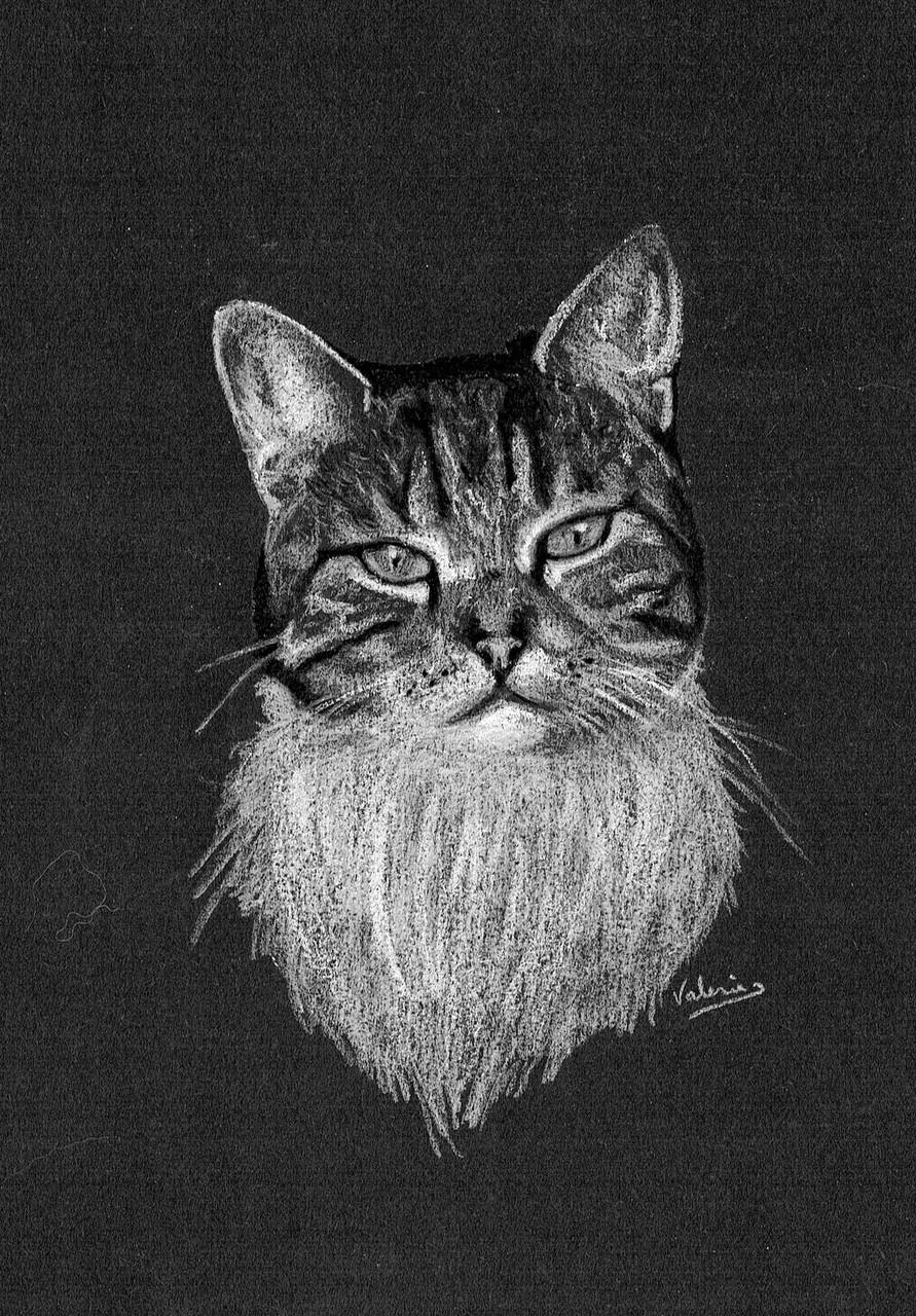 Dierenportret tijgerkat: Wit pastelpotlood en houtskool op zwart papier (2014)