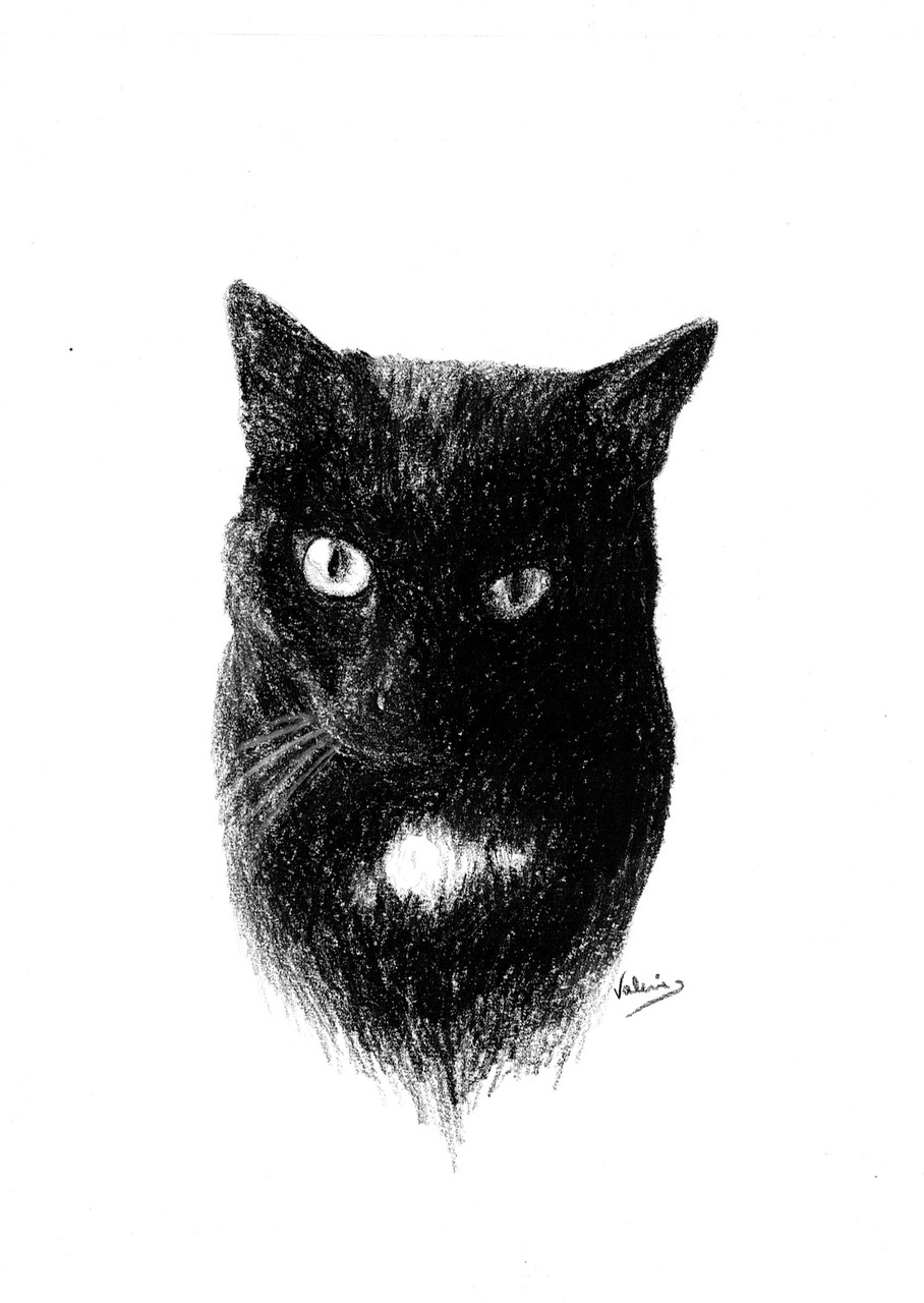 Dierenportret kat: Zwart contékrijt op wit papier (2014)