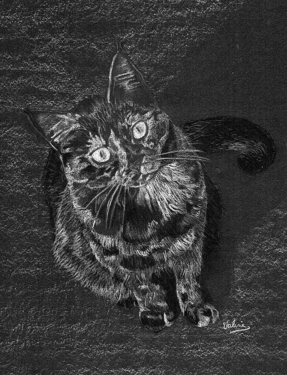 Dierenportret lapjeskat: Wit pastelpotlood en houtskool op zwart papier (2015)