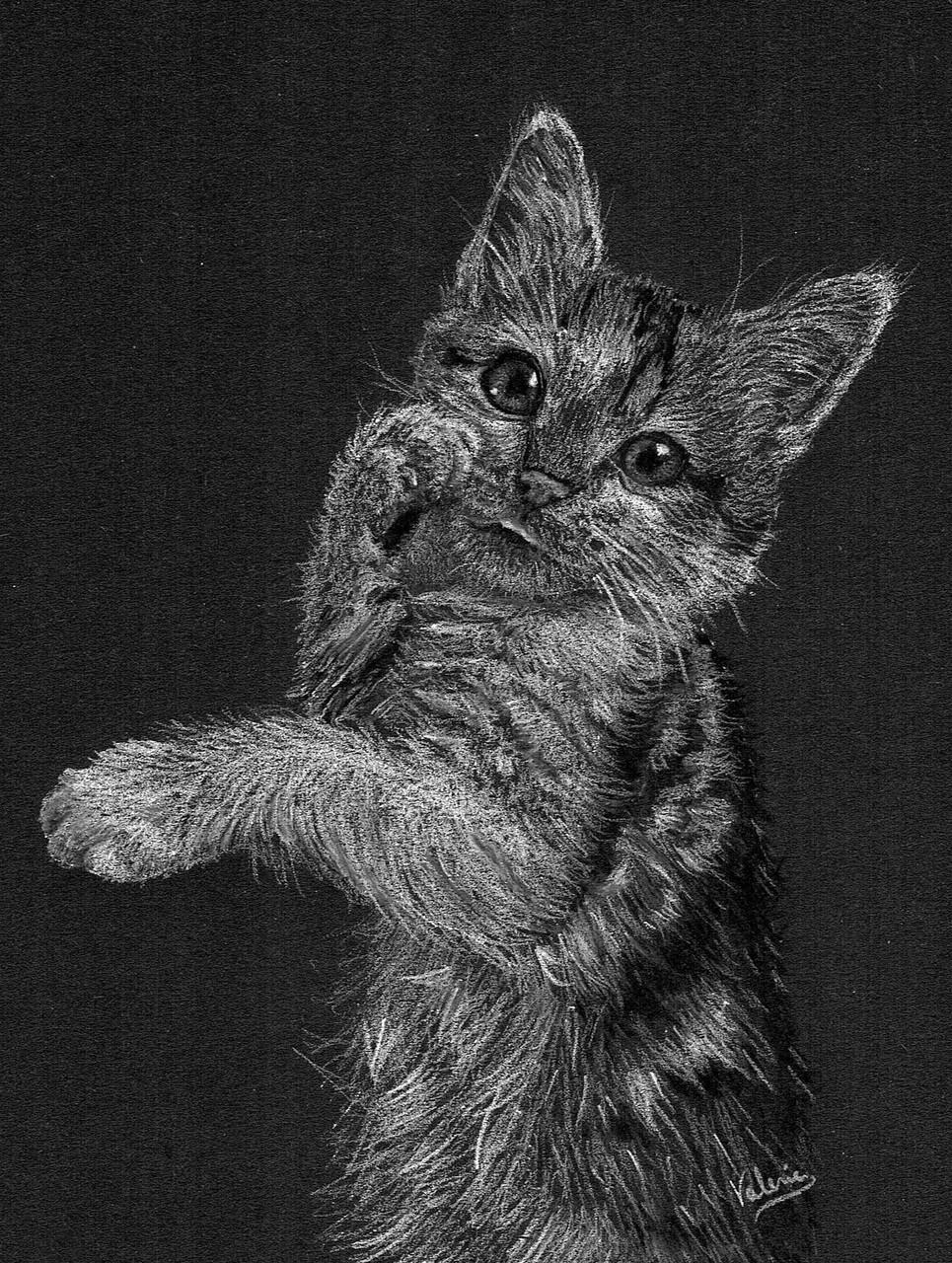 Dierenportret kitten: Wit pastelpotlood en houtskool op zwart papier (2016)