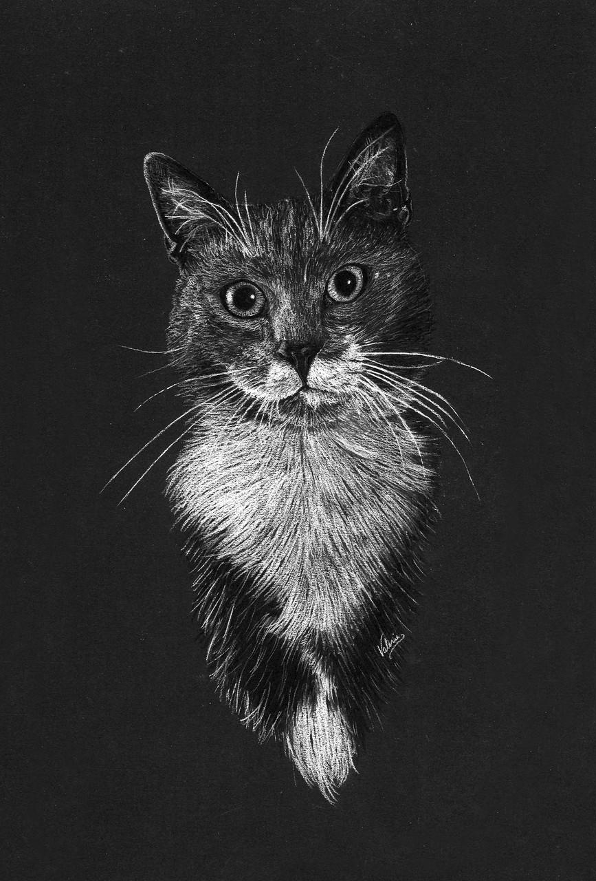 Dierenportret kat met mustache: Wit pastelpotlood en houtskool op zwart papier (2016)