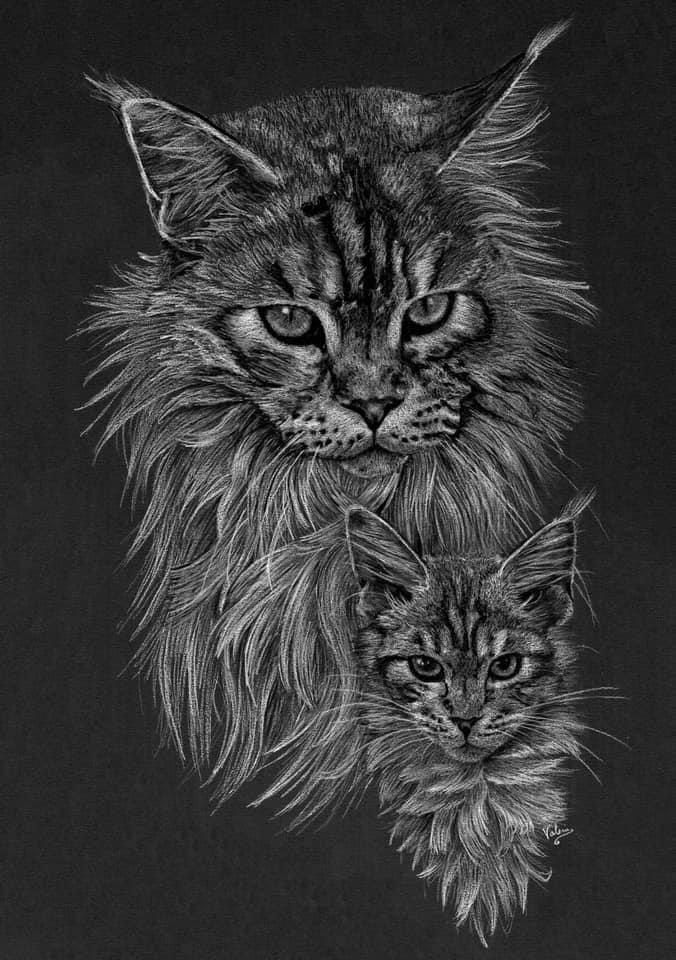 Dierenportret Maine Coon adult & kitten: Wit pastelpotlood en houtskool op zwart papier (2021)
