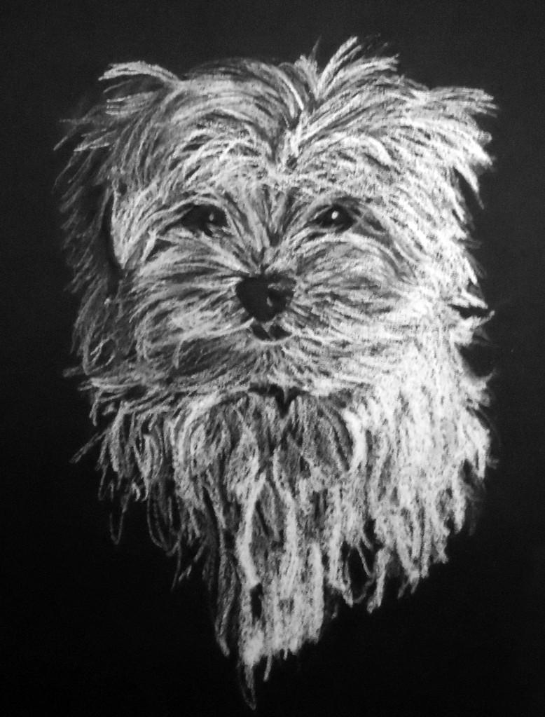 Dierenportret maltezerpup: Wit contékrijt op zwart papier (2013)