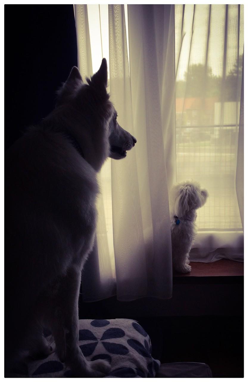 Samen de wacht houden...