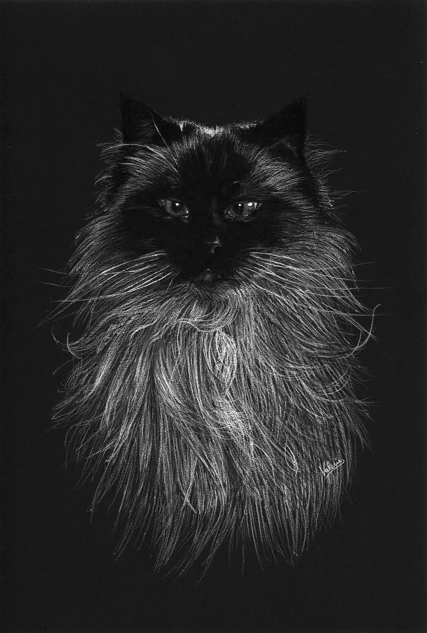 Dierenportret Heilige Birmaan: Wit pastelpotlood en houtskool op zwart papier (2016)