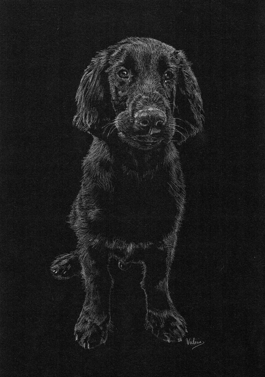 Dierenportret flatcoated retriever: Wit potlood op zwart papier (2016)