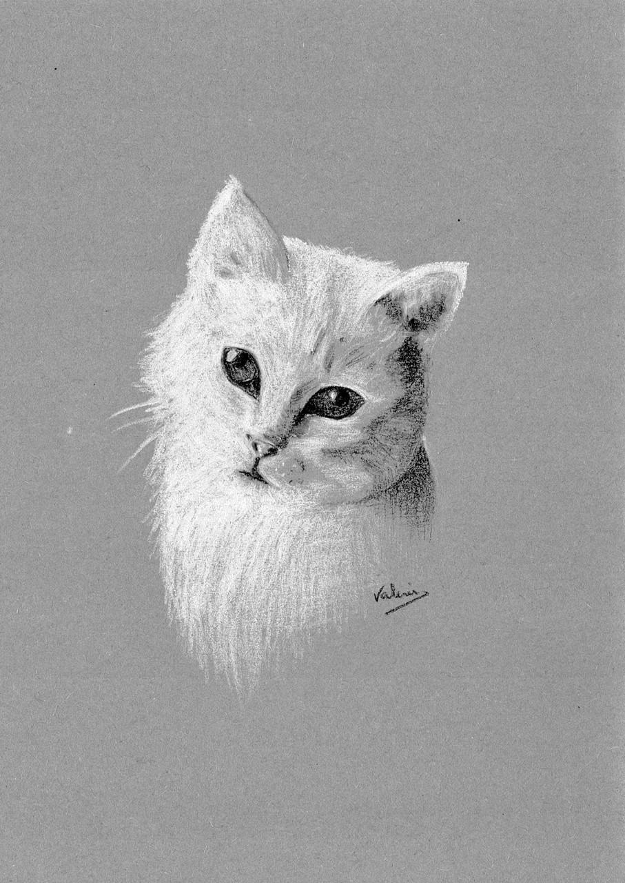 Dierenportret kat: Wit pastelpotlood en houtskool op grijs papier (2014)