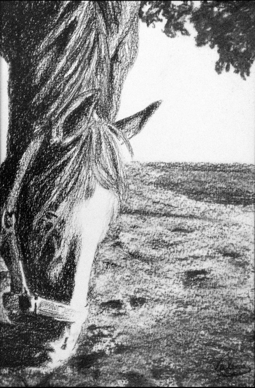 Dierenportret paard: Zwart contékrijt en houtskool op wit papier (2014)