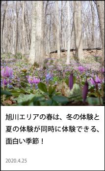 旭川エリアの春は、冬の体験と夏の体験が同時に体験できる、面白い季節!