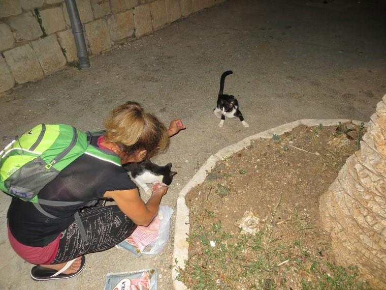 Katzen, Katzen, Katzen, ....