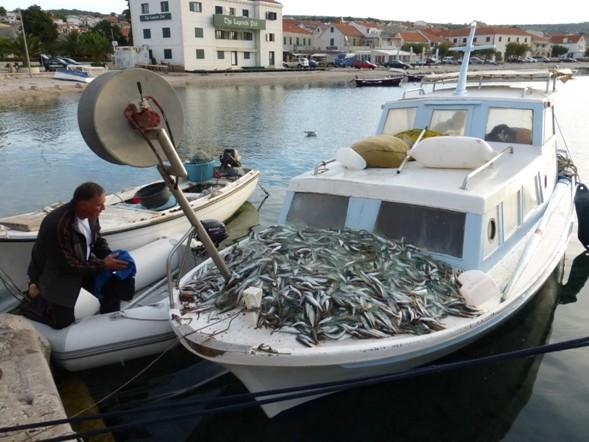 Jede Menge Fische