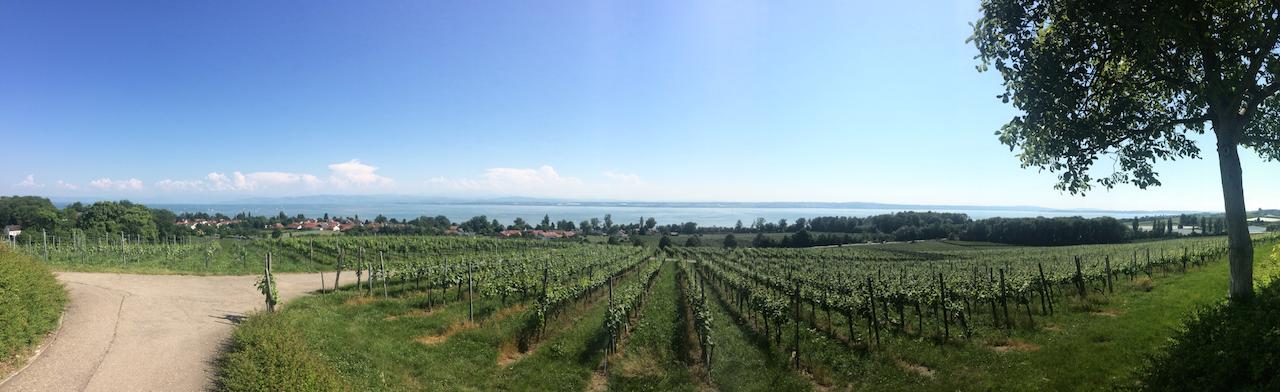 Blick von den Weinbergen aus auf den See bei Immenstaad!
