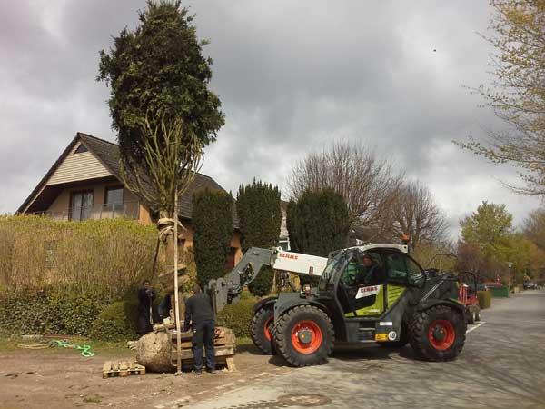 Der Baum wird aufgestellt und ausgerichtet.