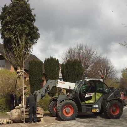 Gartenbau und Landschaftsbau mit Baumpflanzungen mit Garantie von Hennigs!