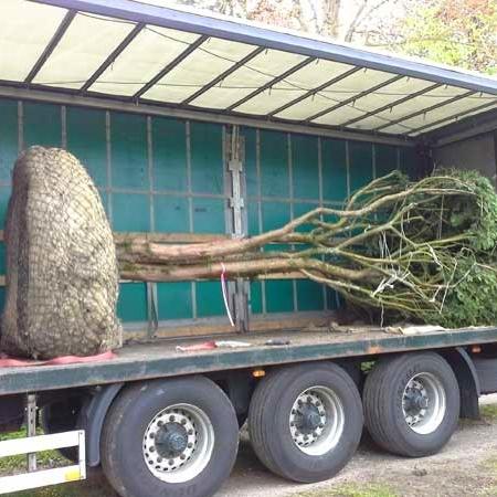Hennings! Gartenbau und Landschaftsbau mit Baumpflanzungen mit Garantie vom Meister