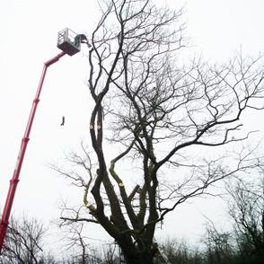 Baumpflege, Baumschneiden, Baumfällung mit Arbeitsbühnen und Hubsteigern