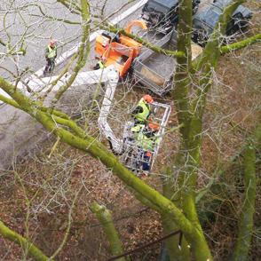 Von der Arbeitsbühne sicher Bäume beschneiden