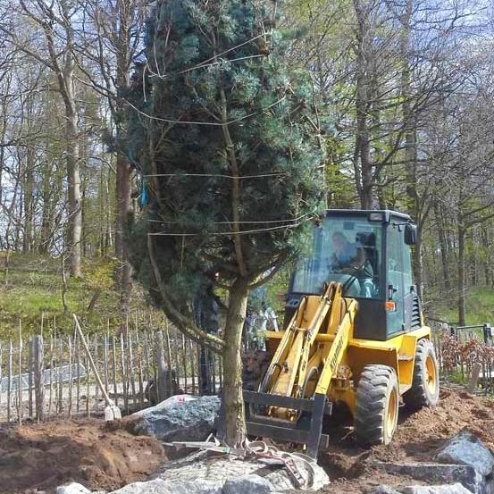 Baupflanzungen fast jeder Größe mit Hennings Gartenbau