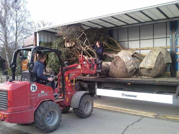 Nur mit dem passenden Gerät lässt sich der Baum heben.