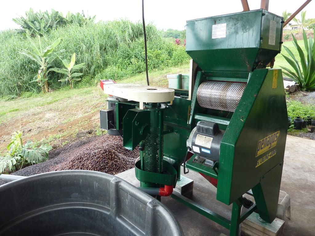 採った実はその日のうちに、この機械で果肉を除去します。