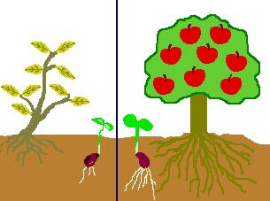 種と木の関係