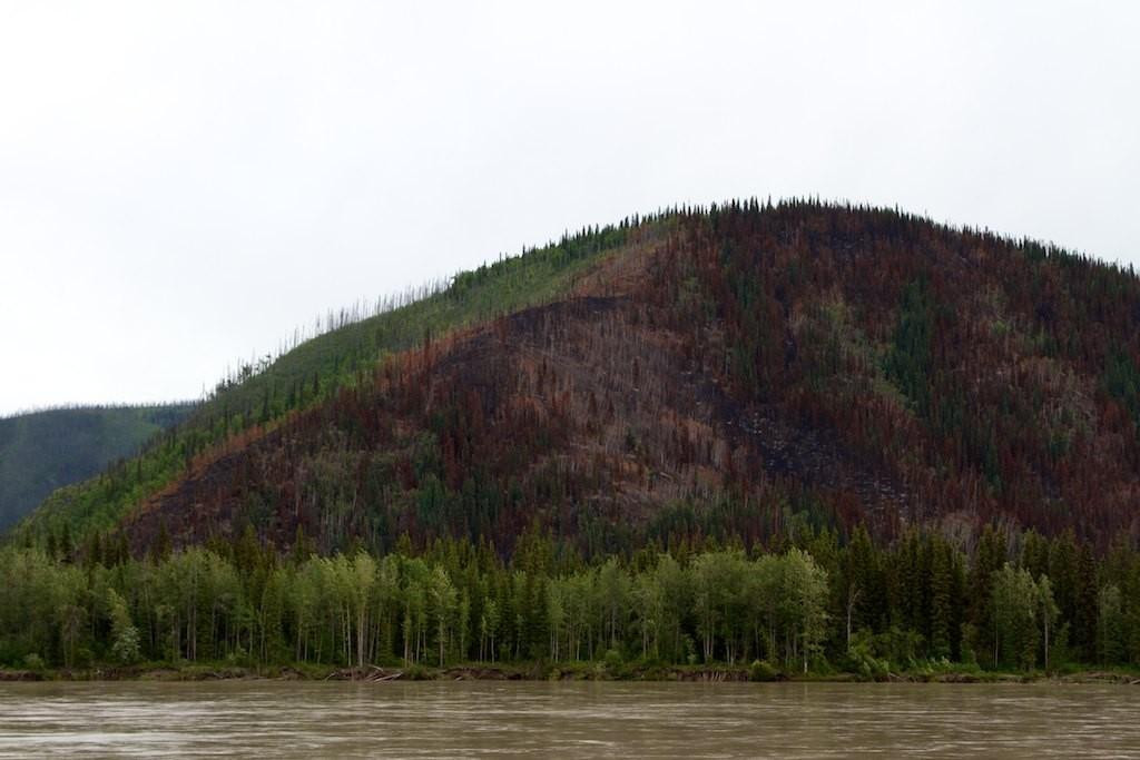 Waldbrände haben auch am Yukon gewütet.