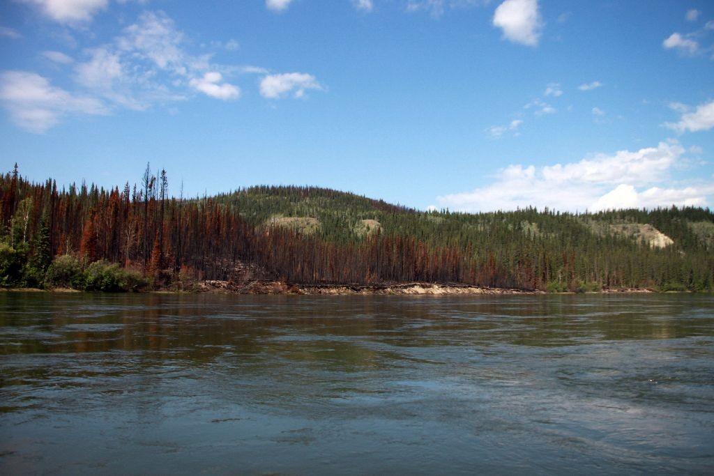 Waldbrände heilen langsam