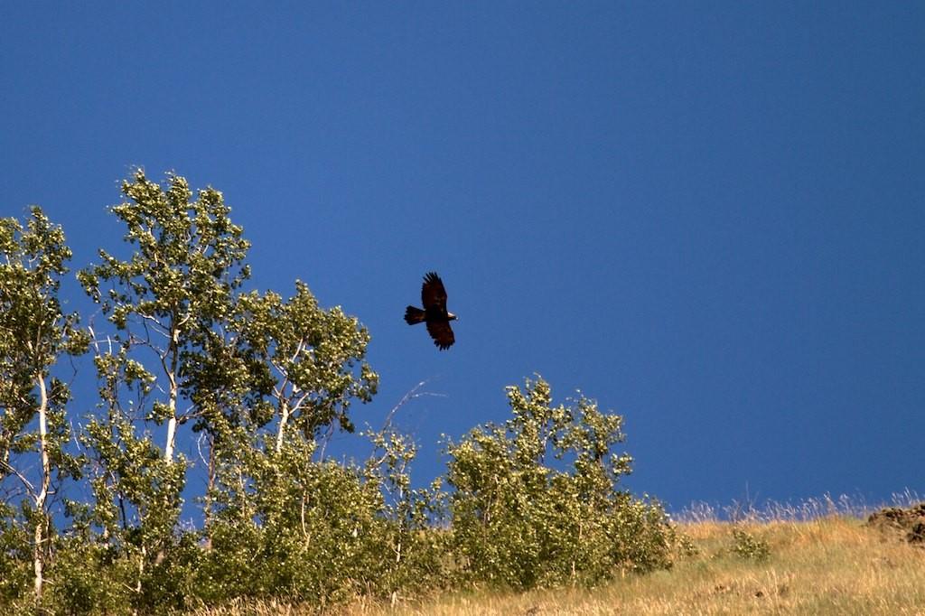 Ein Adler begleitet uns.