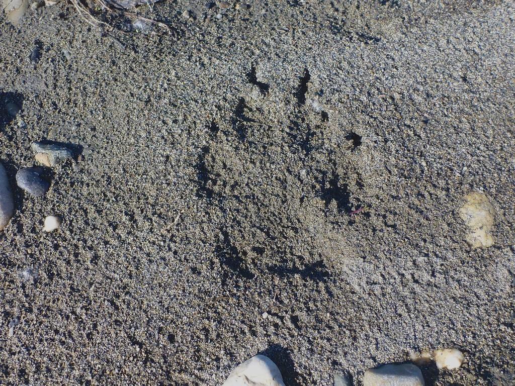 alte Wolfsspur