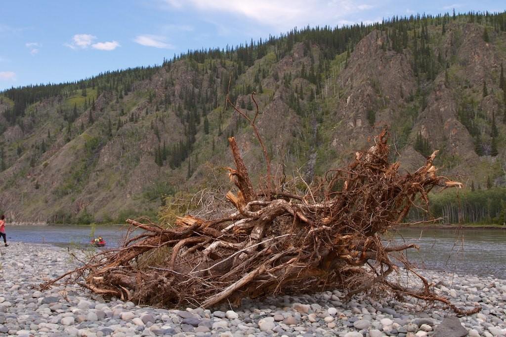 Feuerholz, zu groß und zu nass.