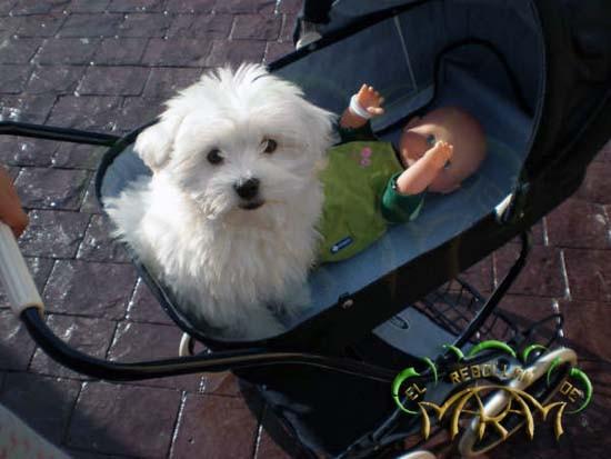 Coco (fotografía enviada por Andrea, Mario, Jose Manuel y Sonia)