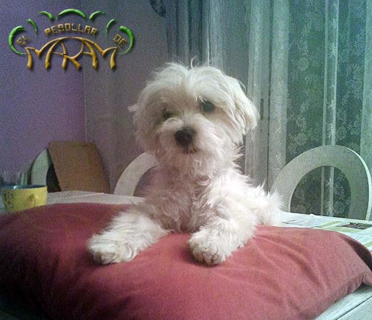 Yenko (fotografía enviada por Ismael, Félix y Puri)