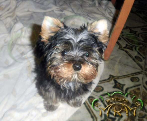 Puppy (fotografía enviada por Tere)