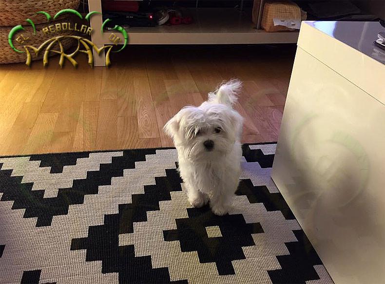 Zara (fotografía enviada por Paloma)