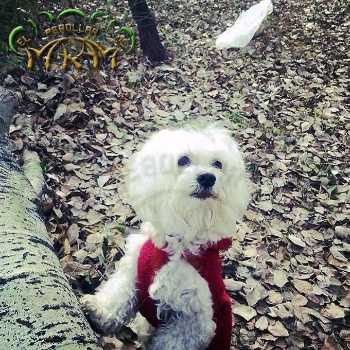 Bobi (fotografía enviada por Andrea)