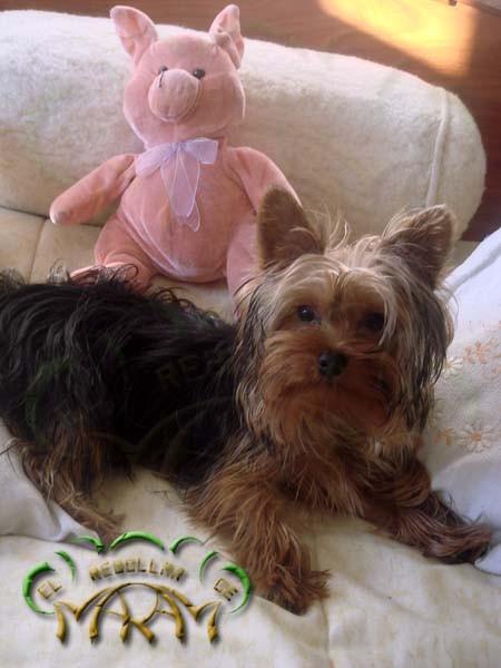 Kiko (fotografía enviada por Mayra Alejandra)