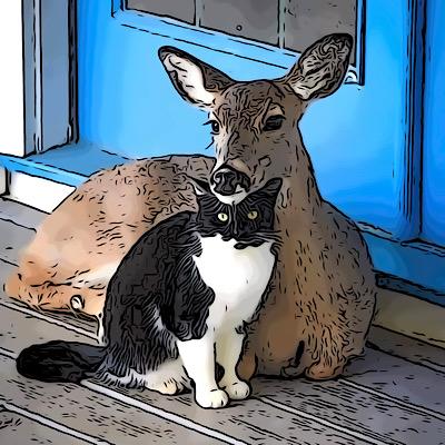 Tierische Freundschaften