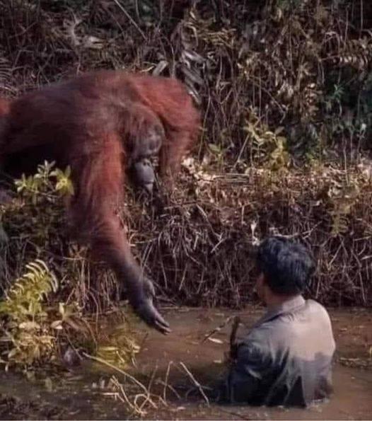 Wundervolle Begegnungen zwischen Lebewesen
