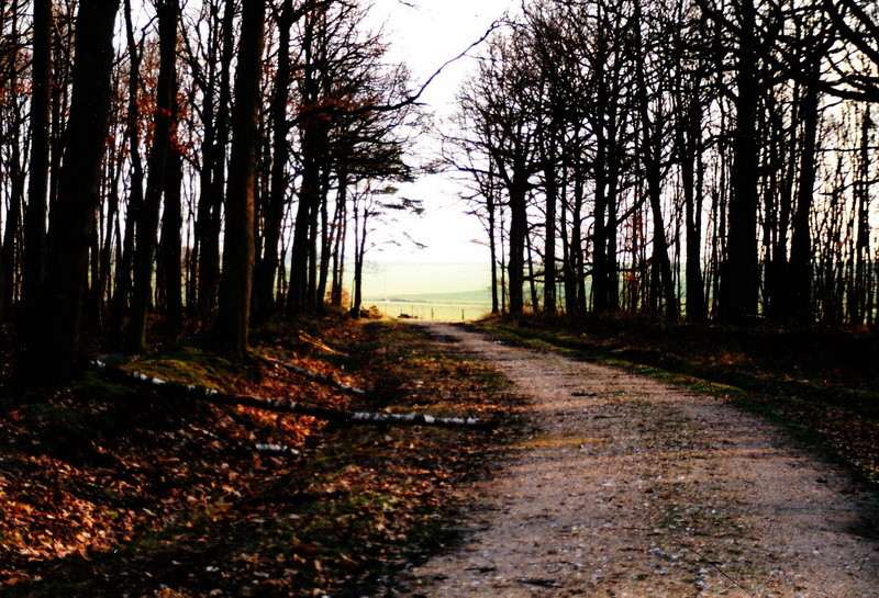 Le chemin du bois du pin coudé