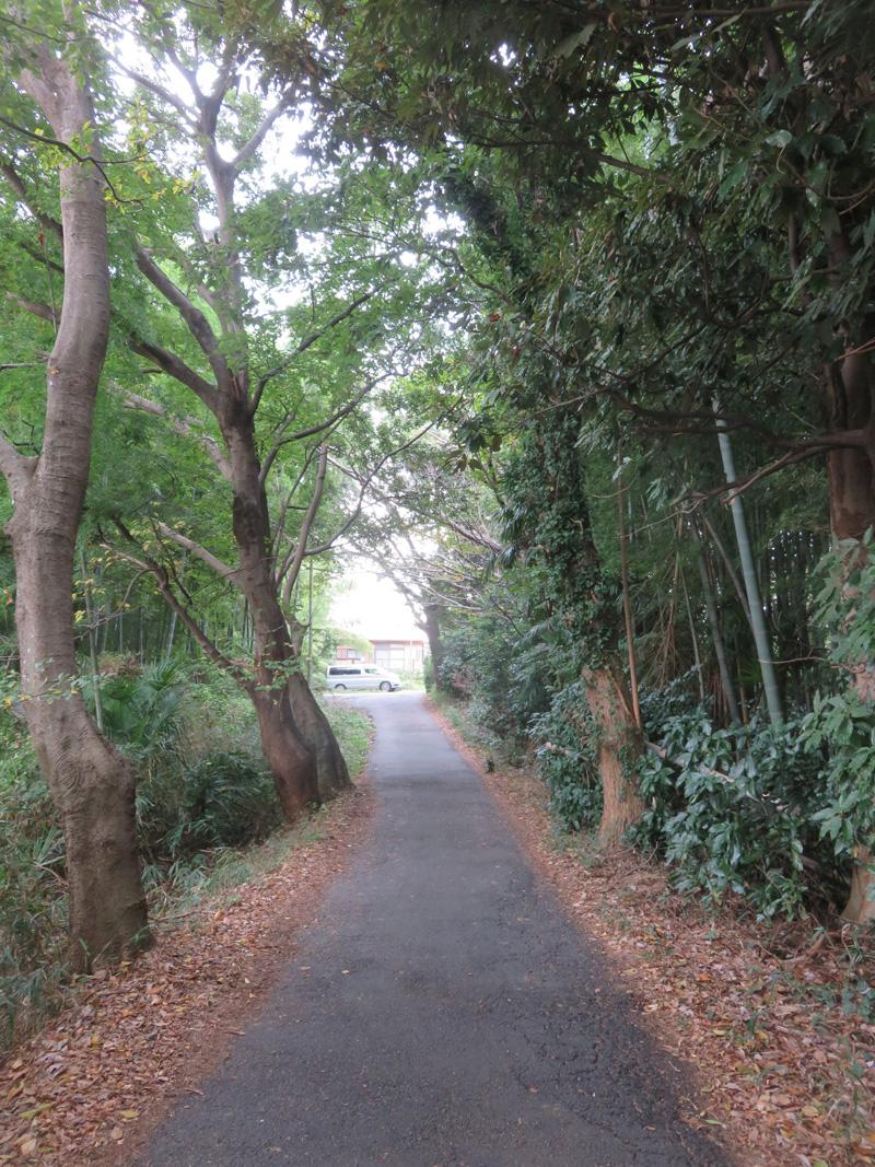 4.エノキ、クヌギ、カシの雑木林の間を抜ける