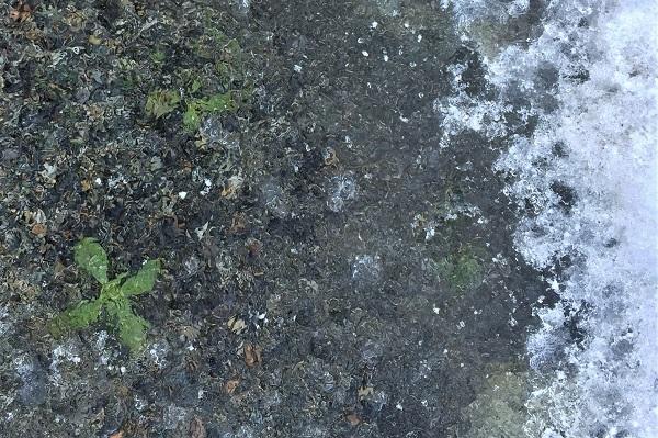 草も氷の中です。
