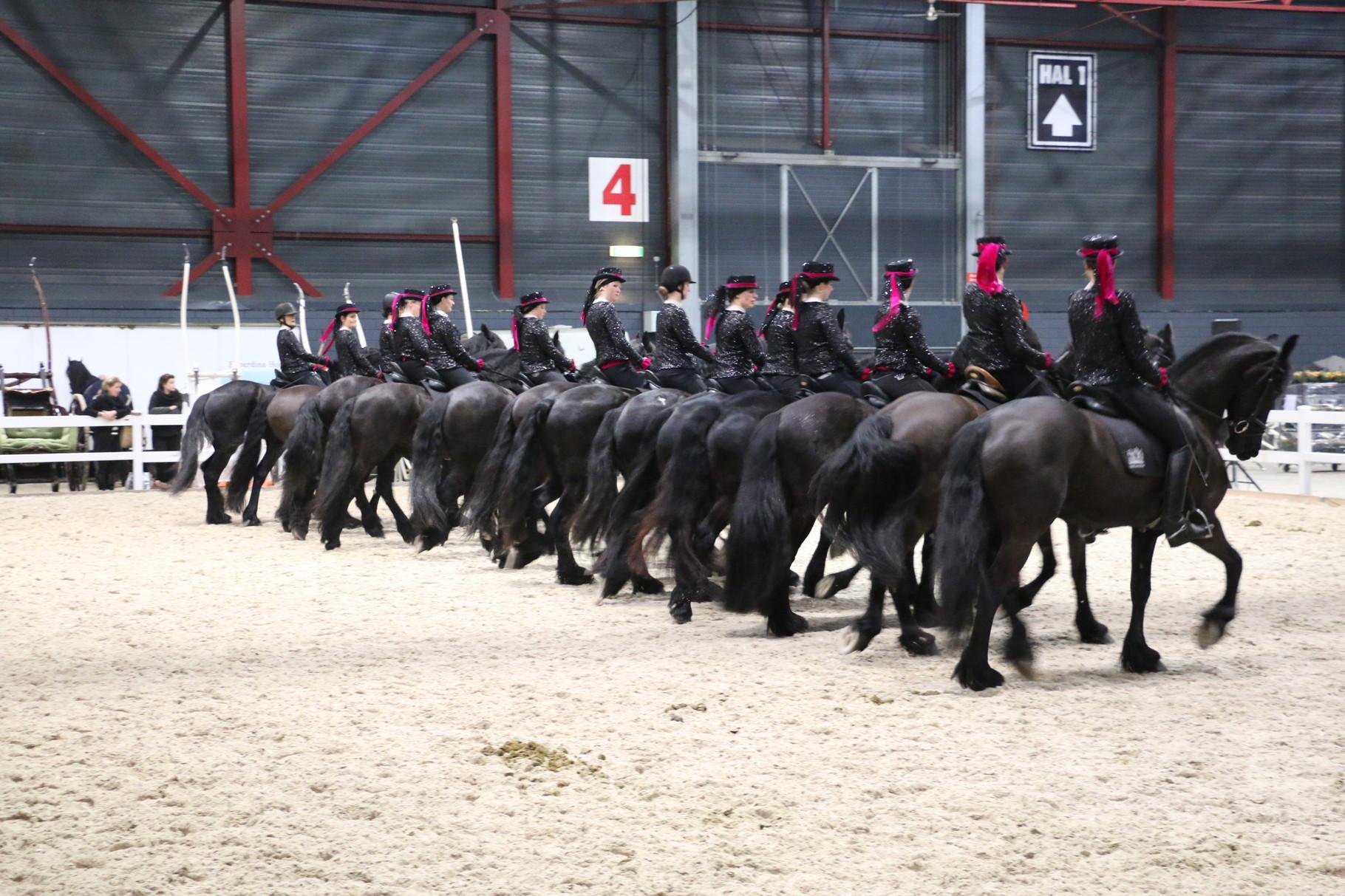 KFPS Hengstenkeuring te Leeuwarden 2015