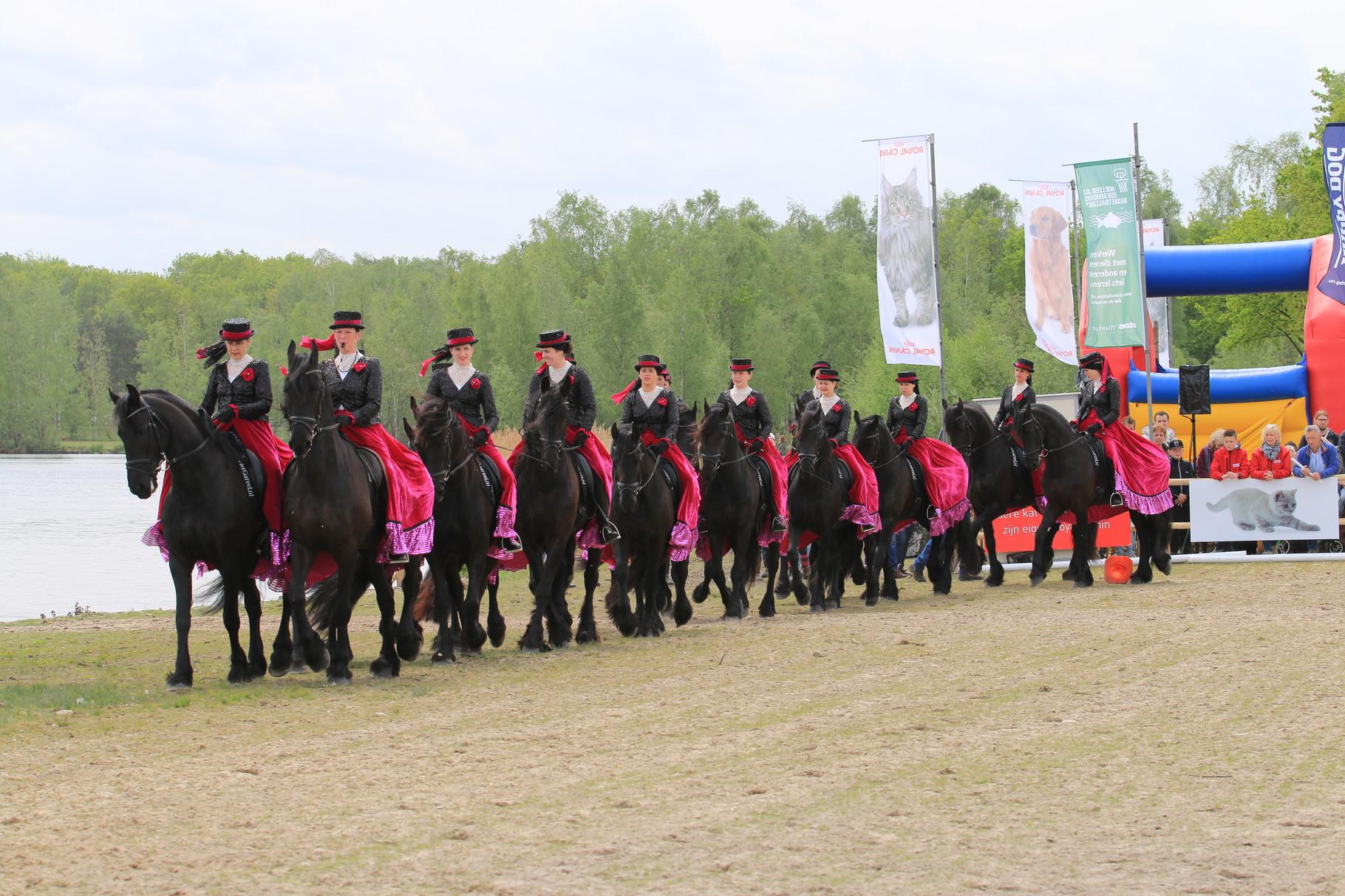 Animal Event 2015