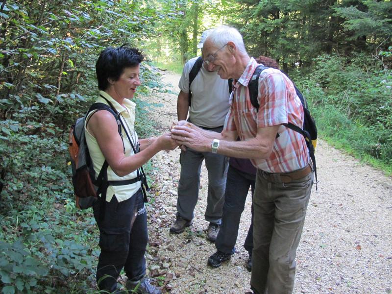 Erläuterung des gefundenen Pilzes
