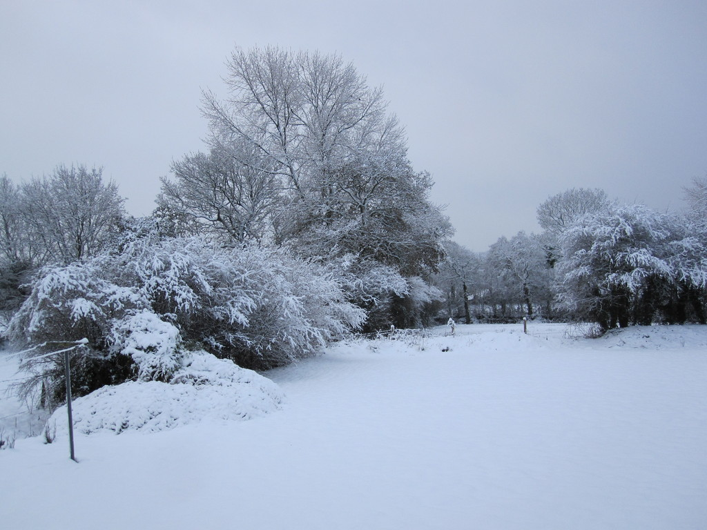 Le jardin sous la neige.