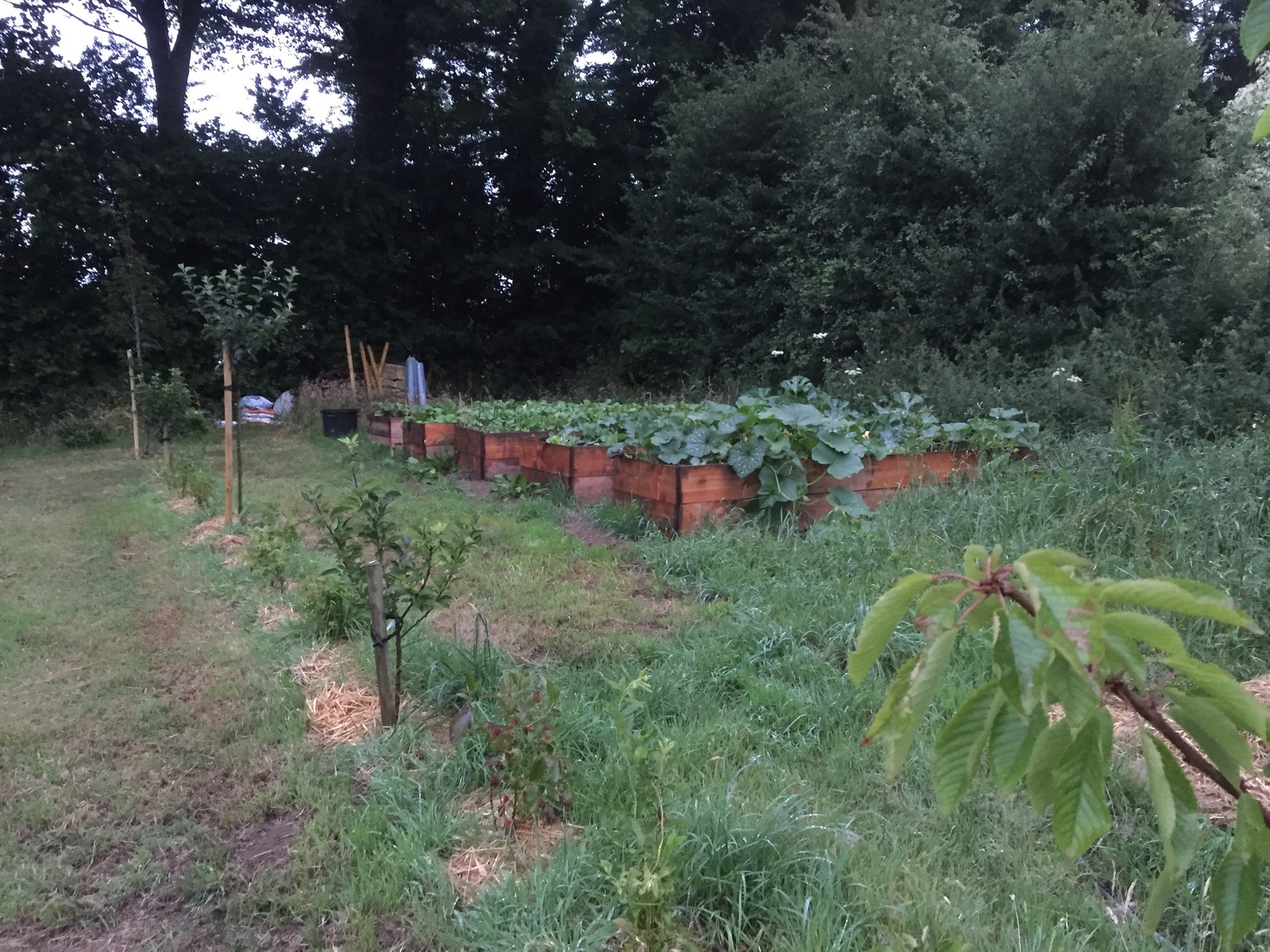 Mes nouveaux bacs en bois à légumes. 50 cm de haut, le pied pour travailler.