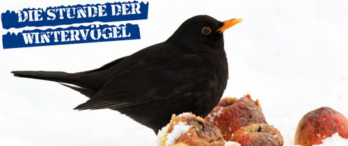 NAJU Stunde der Wintervögel