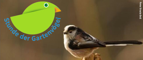 NAJU Stunde der Gartenvögel 2015
